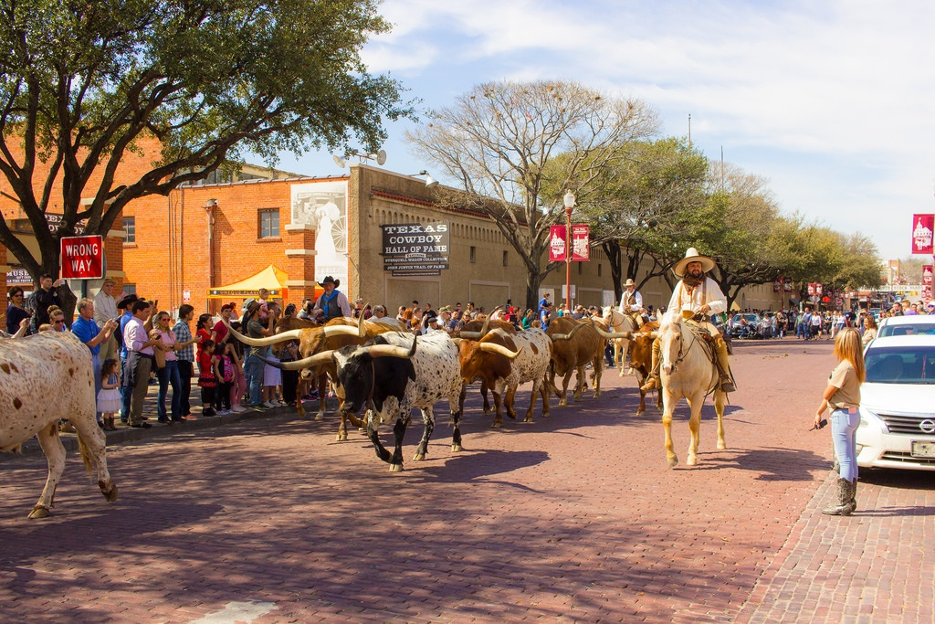 Talkin-Texas-Fort-Worth-Cattle-Drive